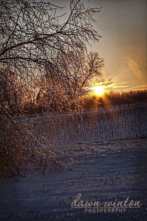Snowdayjan3110-26-1 copy